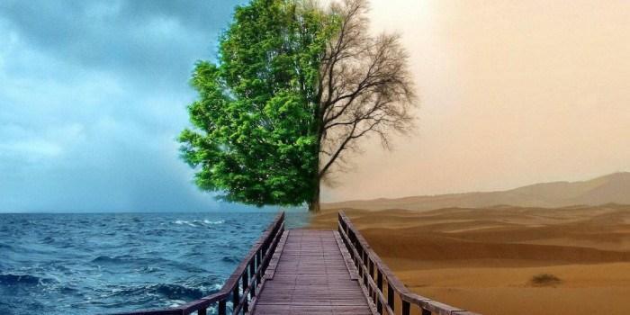 Renaciendo de mis Cenizas – Resiliencia